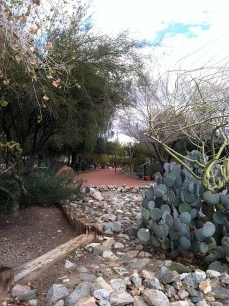 Arroyo Del Camino Cactus Garden