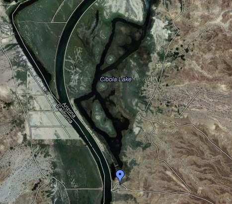 Following the levee south toward Cibola Lake, at the south end there is a road up the hill for an overview of the lake. This is a great spot to watch the river of swallows at dawn moving north off their roost sites. Check out the Cibola NWR for more info on how to get here.